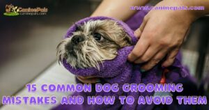 15 Common Dog Grooming Mistakes and How to Avoid Them