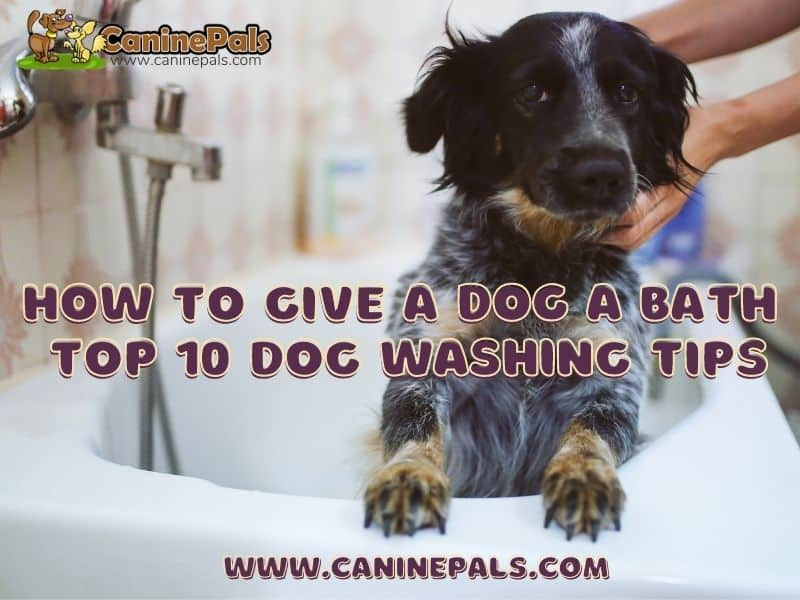 How to Give a Dog a Bath: Top 10 Dog Washing Tips