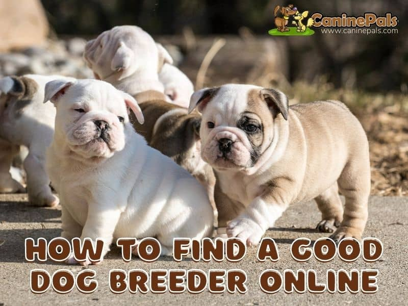 How to Find a Good Dog Breeder Online