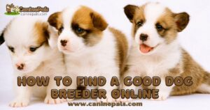 Tips on How to Find a Good Dog Breeder Online