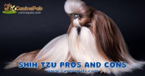 shih tzu pros and cons