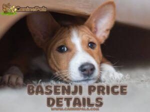 Basenji Price
