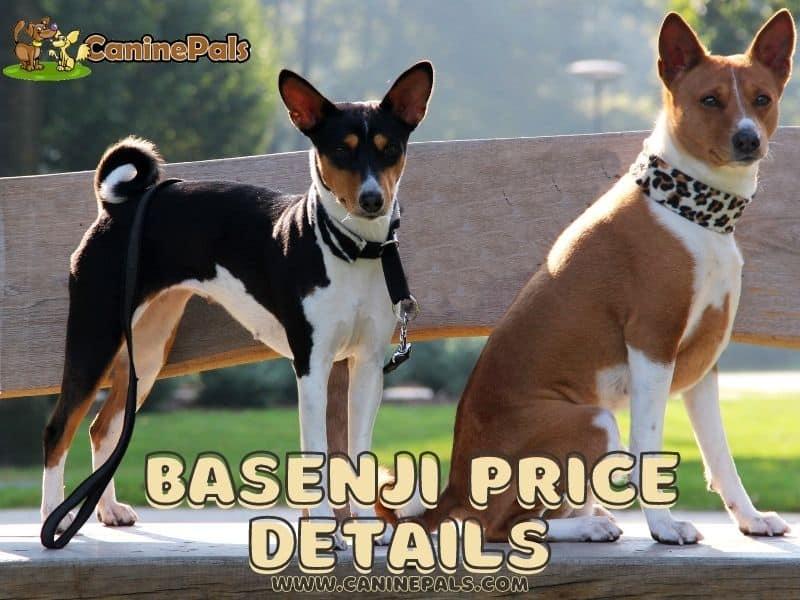 Basenji Price Details