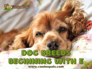Dog Breeds Beginning With E