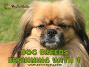 Dogs That Start With T