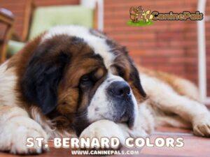 St. Bernard Colors