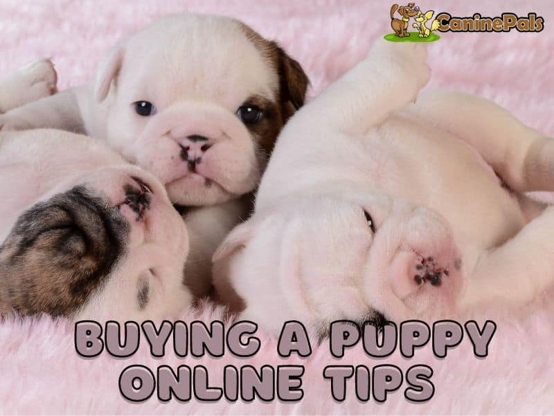 Buying a Puppy Online Tips